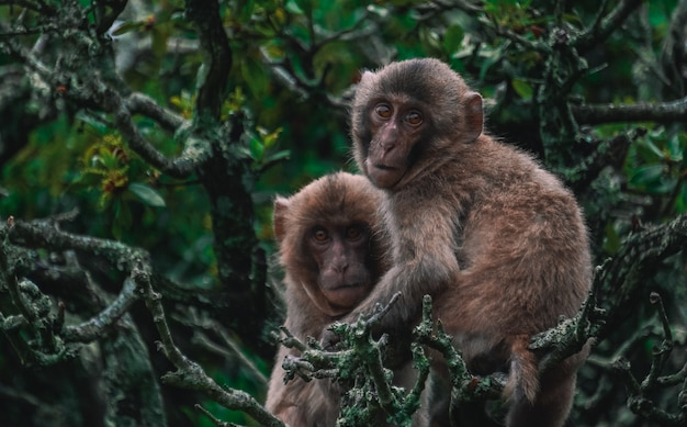 Picture of two monkeys holding each other on tree branches in the jungle