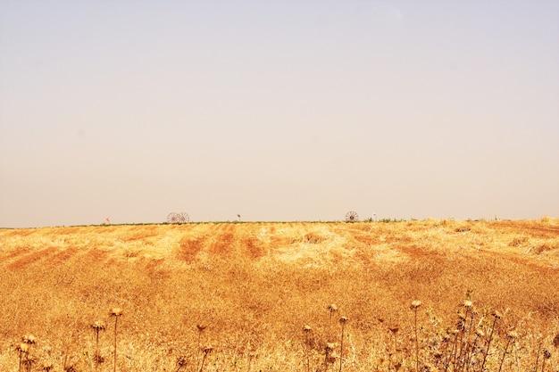 Живописные древние горы около мертвого моря в израиле