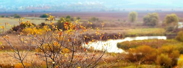川沿いの木々、パノラマの絵のように美しい秋の風景。木の上のカラフルな紅葉
