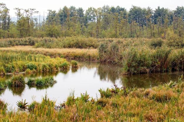 川と岸の川の茂みのある美しい秋の風景、水に植生が映る