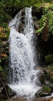 ブウィンディ国立公園の美しい森の滝