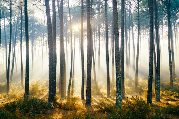 Picturesque forest with sun rays shining through trees.