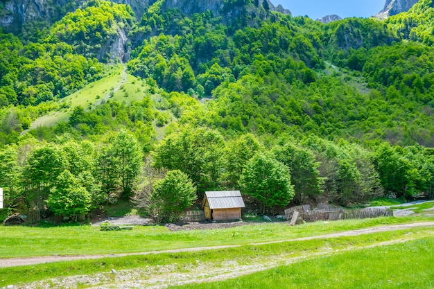 大きな高山の近くの絵のように美しい緑の牧草地。