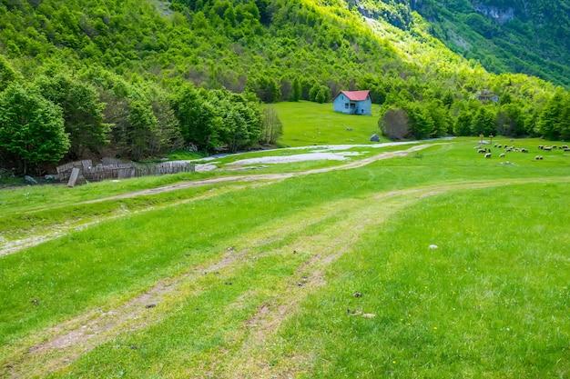 大きな高山の近くの絵のように美しい緑の牧草地