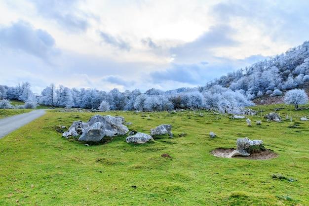 서리로 덥은 나무와 흐린 하늘 아래 그린 필드가있는 그림 같은 풍경