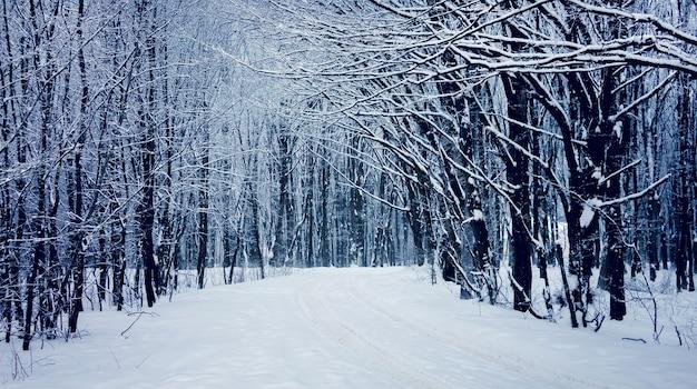 森の中の道に沿って雪に覆われた木々のある絵のように美しい風景。冬の森の道_
