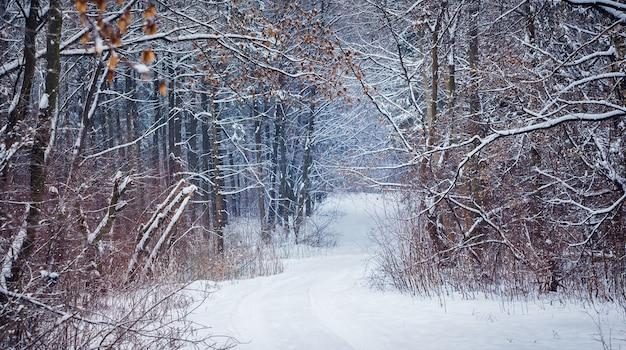 森の中の雪に覆われた木々と木の上の乾燥した葉のある絵のように美しい風景。冬の森の道_