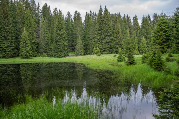 The picturesque little lake is located far away in the forest.