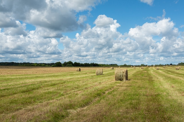 Picturesque meadow of pskov region, russia in the late summer on a sunny day.