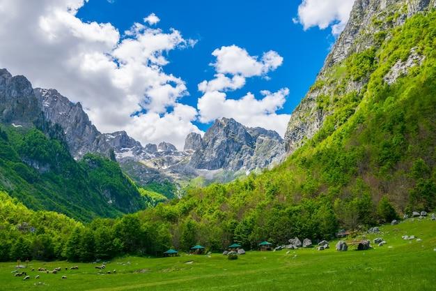 絵のように美しい牧草地と森は高山の中にあります