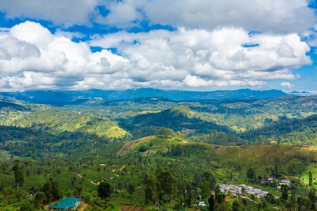 Живописный природный ландшафт. плантации зеленого чая в высокогорье. выращивание чая
