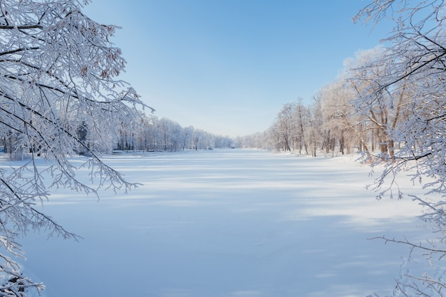 얼어 붙은 호수와 나무의 아름다운 파노라마는 맑은 겨울 날에 눈으로 덮여 있습니다.