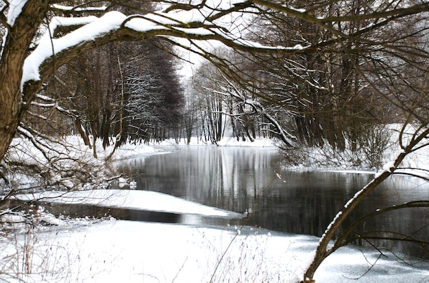 The picturesque river in the winter forest