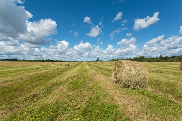 真夏に干し草の山があるロシアの緑豊かな土地の絵のような風景。
