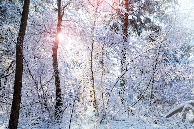 겨울의 그림 같은 눈 덮인 숲