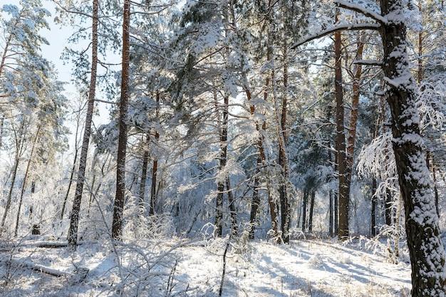冬の絵のように美しい雪に覆われた森
