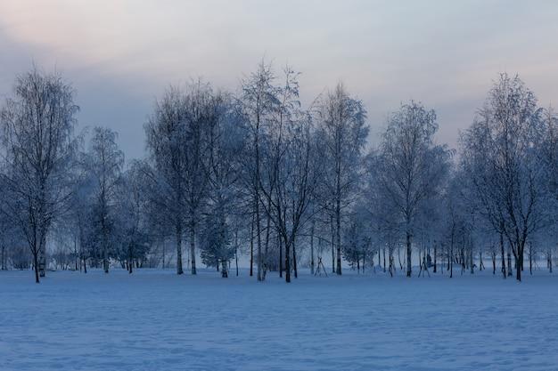 상트 페테르부르크, 러시아에서 공원의 그림 같은 겨울 저녁 풍경.