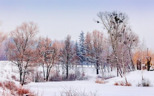 Живописный зимний пейзаж с деревьями на снегу_