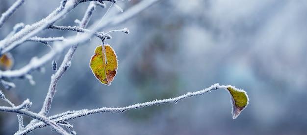 흐릿한 배경의 사과 나무에 서리 덮인 잎이 있는 그림 같은 겨울 전망