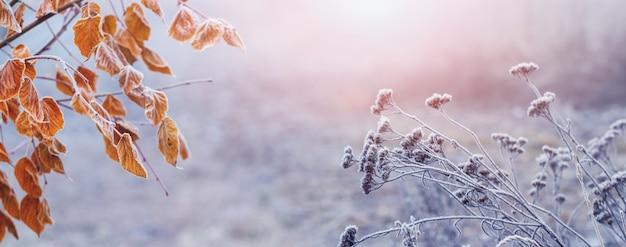 나무에 서리 덮인 잎과 일출 시 마른 식물이 있는 그림 같은 겨울 전망. 크리스마스와 새 해 배경