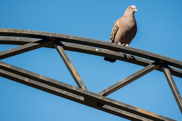 Pidgeon over a metal structure