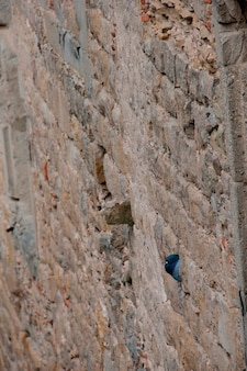 壁にピジョンの巣