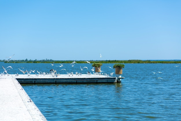 Pier on the river bank. a large flock of seagulls. summer day.