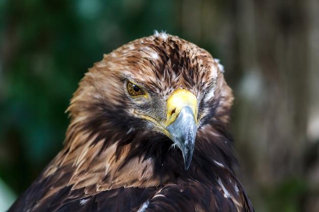 Пронзительный взгляд орла в самой сути.