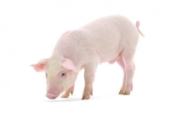 Свинья пахнет полом