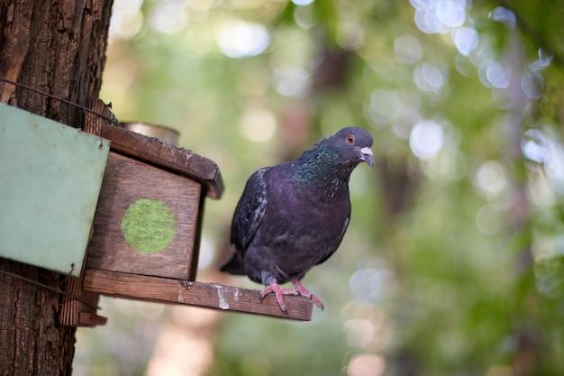 Pigeon bird sitting on a stick house birdhouse bird feeder blurred