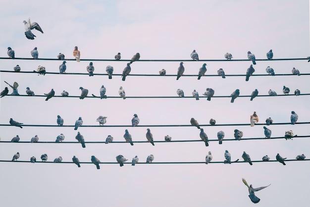 비둘기 새는 여름에 흐린 푸른 하늘 날에 전기 또는 전화 케이블 라인에 머물며 도시 생활과 복사 공간에서 자연 생존을 보여줍니다.