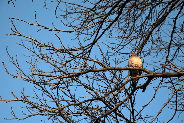 木の上の鳩