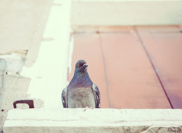 ヴェネツィアの窓にピジョン