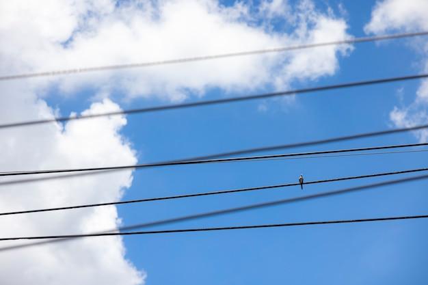 Голубь сидел на линии электропередачи в ясный день с голубым небом и белыми облаками на заднем плане.
