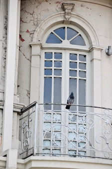 Pigeon perched on the wrought iron railing of the balcony of french doors