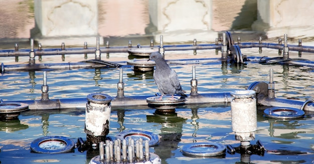 A pigeon sits on the edge of a city fountain on a hot, sunny summer day.