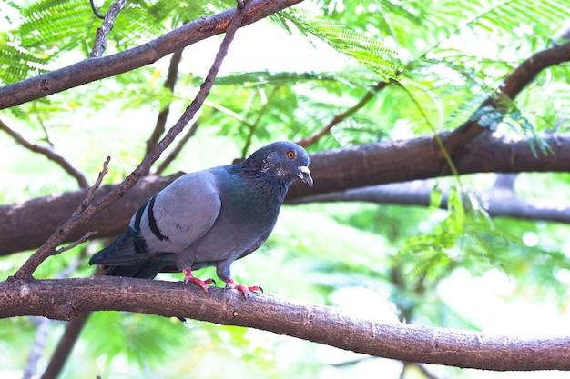 木の枝にしっかりと立っている鳩