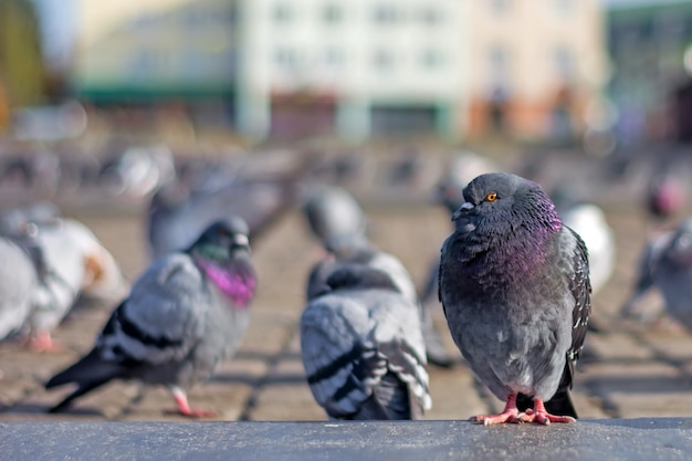 Pigeons bask in the town square under the sun in late autumn