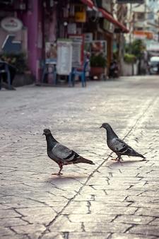 비둘기는 황량한 도시의 아늑한 거리에서 포장 돌의 대기 보도를 따라 자유롭게 걸어갑니다. 저녁 도시 풍경, 소프트 포커스, 세로 사진