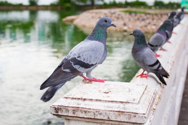 방콕, 태국에서 강 근처 비둘기