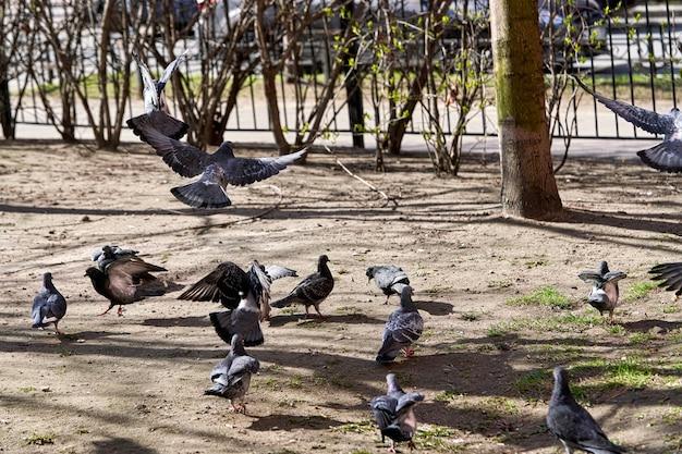 Голуби на улице города городские голуби на асфальте