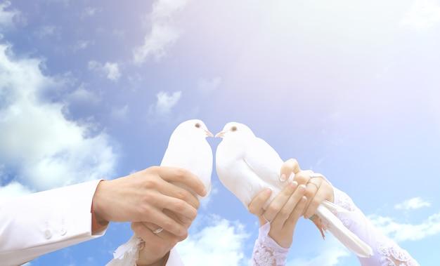 젊은 사람들의 손에 결혼식에 비둘기