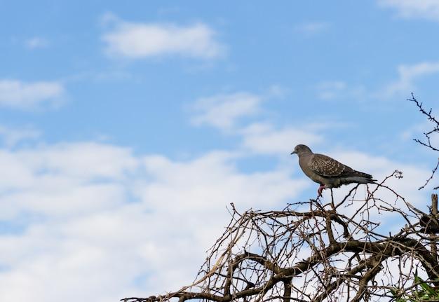 나뭇 가지에 비둘기