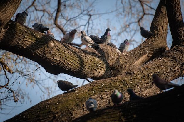 Голуби сидят на голых ветвях деревьев.