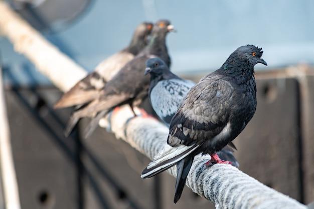 Pigeons sitting on ship hawser.