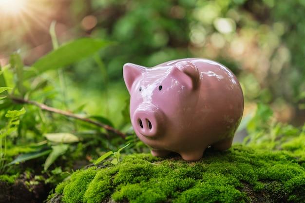Piggy bank on green grass in nature. idea concept saving