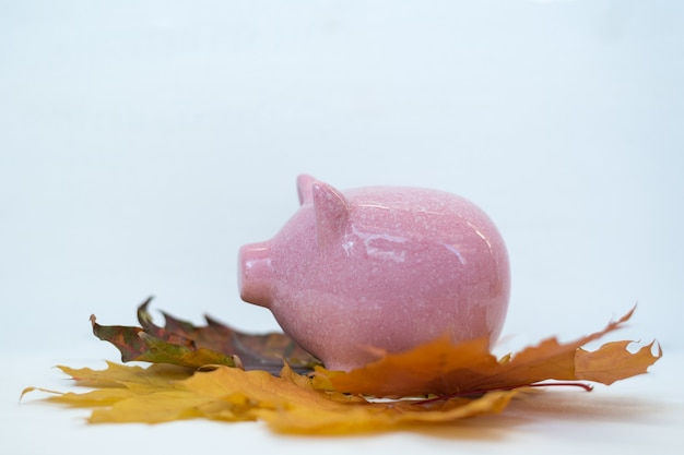 Piggy bank standing on autumn leaves on white background. autumn discounts black friday concept.