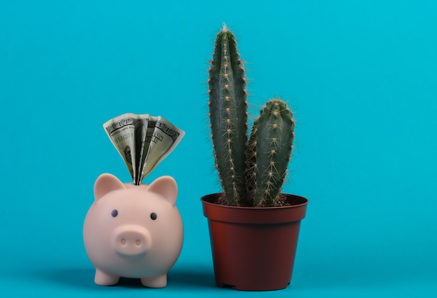 Piggy bank with dollar bill and cactus. blue  wall. save money