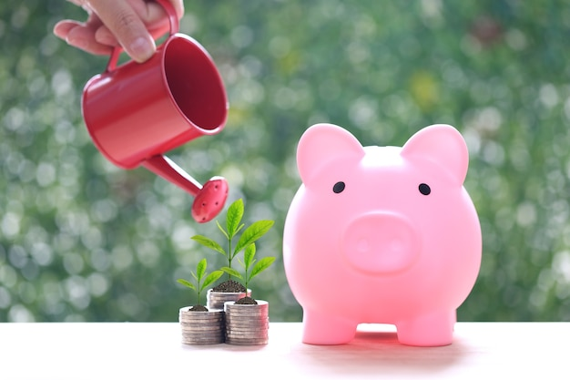 Piggy bank and woman hand holding watering can with plant growing on stack of coins money on natural green background, interest rates and business investment concept