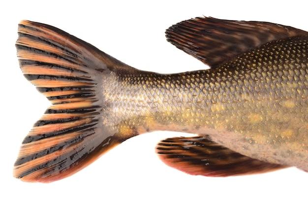 Pike tail